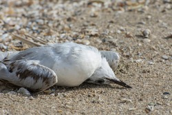 Dead bird on the ground. The death of birds from pesticides. Ban on illegal bird hunting.