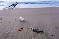 dead bird on the sand, dead bird and garbage on the beach