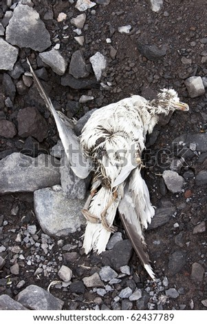 Dead bird washed ashore at stony coast