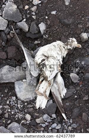 Dead bird washed ashore at stony coast