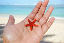Dead bright red starfish hand held at beach on sunny day
