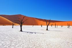 Dead Camelthorn Trees against red dunes and blue sky in Deadvlei, Sossusvlei. Namib-Naukluft National Park, Namibia, Africa