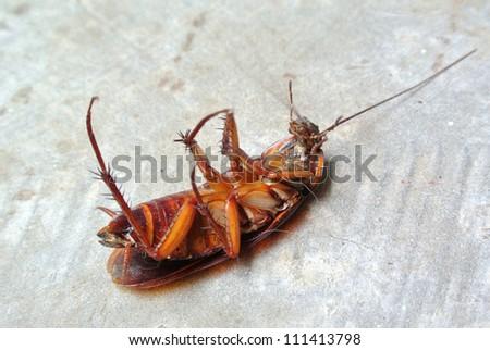 Dead Cockroach isolated on floor