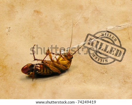 Dead Cockroach on his back with killed stamp - isolated on white Surface