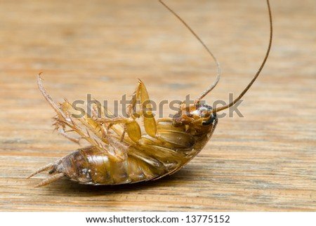 Dead  Cockroach on wooden table