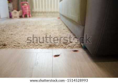 Dead cockroaches in an apartment house on the background of the sofa. Inside high-rise buildings. Fight with cockroaches in the apartment. Extermination.