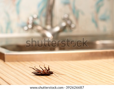 Shutterstock Dead cockroaches in an apartment house on the background of the water faucet. Inside high-rise buildings. Fight with cockroaches in the apartment. Extermination.