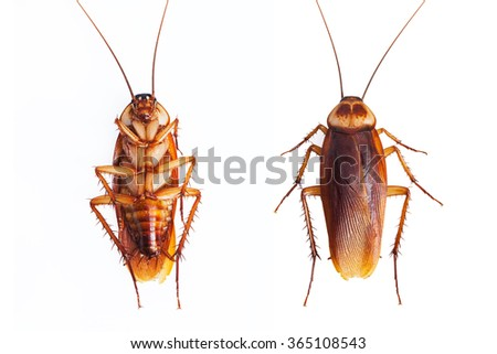 Dead cockroaches on white background