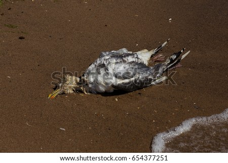 Dead cormorant on sandy beach. Conceptual picture of wildlife, nature, death, poison, toxicity, environment, pollution and environmental problems. Epidemic of avian influenza #654377251