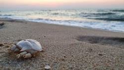Dead crab and beach