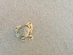 Dead crabs on the beach.