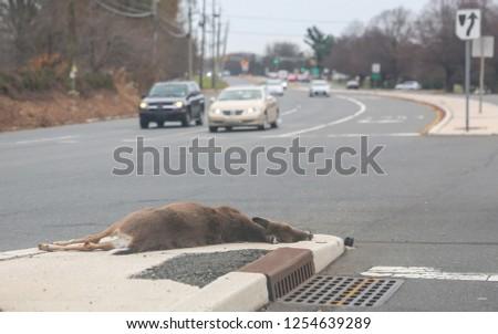 dead dear on the asphalt road hit by a car. #1254639289