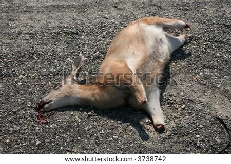 Dead deer missing all four lower legs