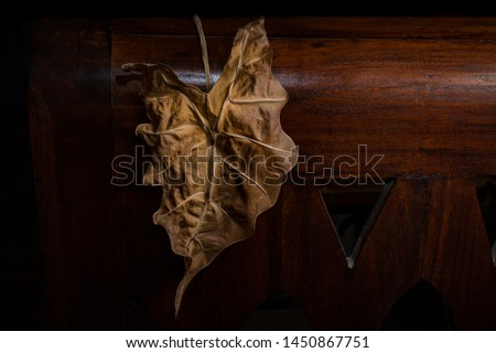 Dead Dried and Wilted Leathery Brown Elephant Ear Leaf Hanging on a piece of Wooden Furniture