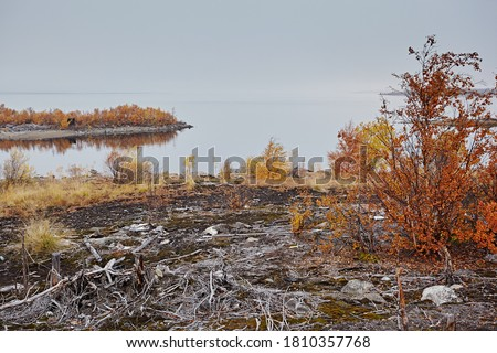 Dead dry snags and trees on the sand. Once there was a tundra here, after acid rains died. Ecological problems and structures from the plant. Industrial landscape against a cloudy gloomy sky