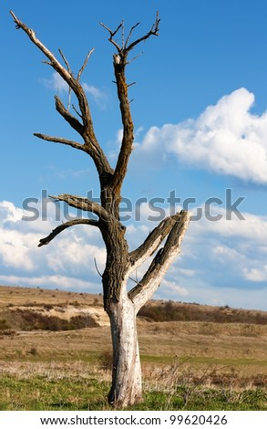 Dead dry tree near Varna,Bulgaria
