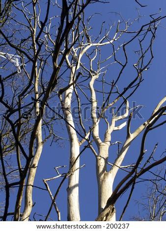 how to get rid of dutch elm disease