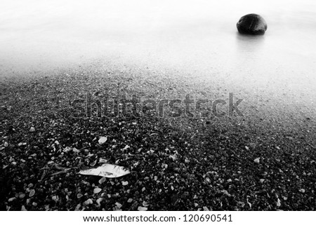 dead fish and coconut on the beach ,black and white