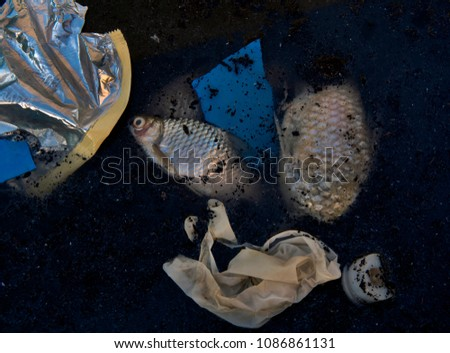 dead fish and plastic garbage floated in the dark water, water pollution.dead, poisoned fish lies in the river bank. Environmental pollution. The impact of toxic emissions in the aquatic environment o