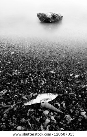 dead fish and stone on the beach, black and white