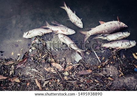 Dead fish floated with fly and plastic bottles and other trash in the dark water, Water pollution, River pollution, Beach pollution. #1495938890