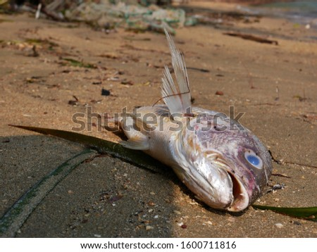 Dead fish in polluted muddy beach stock photo