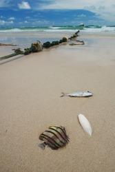 Dead fish on a tropical beach