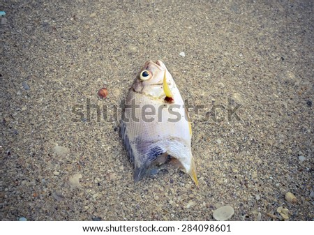Dead fish on the beach. Water pollution concept/Dead fish on the beach/ Dead fish on the beach. Close up (dead, fish, pollution)