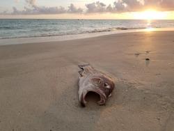 Dead Fish Sunset