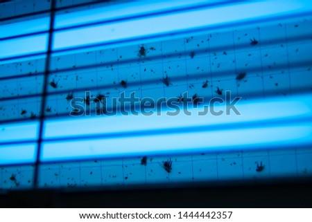 Dead flies in electric fly killer machine