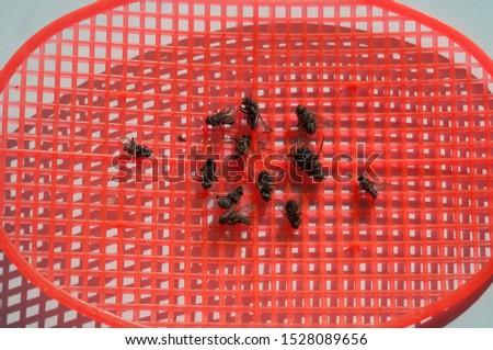 dead flies killed by a fly swatter