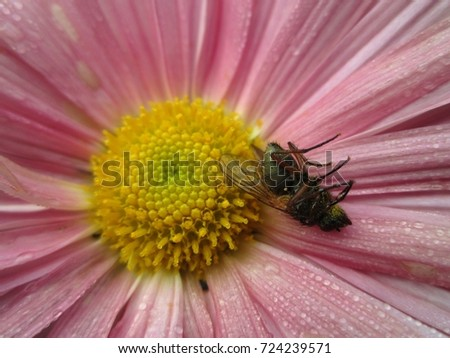 Stock Photo Dead fly on a flower