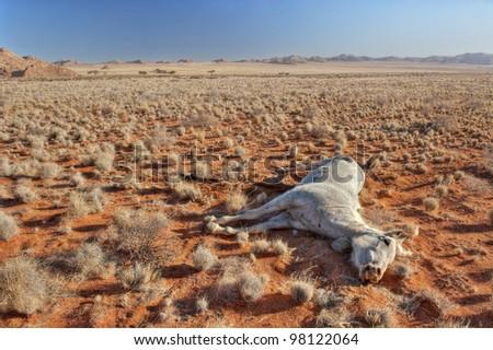 Dead horse in the desert of Namibia