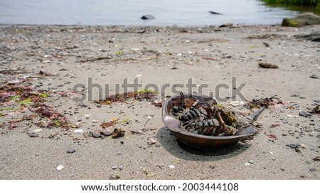 Dead horse shoe crab on beach eating by flees Stockfoto ©