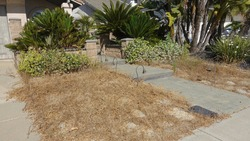 Dead lawn in neglected front yard