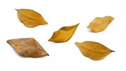 Dead leafs isolated on a white bakground.