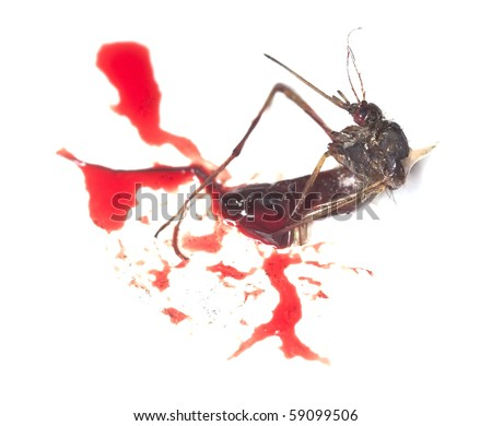 http://image.shutterstock.com/display_pic_with_logo/254068/254068,1281926621,1/stock-photo-dead-mosquito-and-human-blood-59099506.jpg