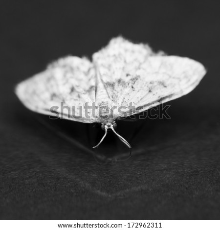 Dead moths with dark background, light and reflexions