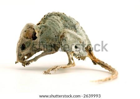 Dead mouse 2