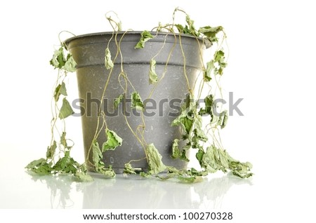 Dead or dying plant in a little jar