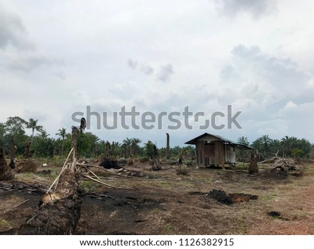 Dead palm tree in a plantation with dead grass on the land and old rustic hut as background. Global warming effect