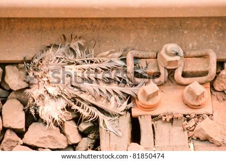 Dead pigeon beheaded by train decomposing in railway track.
