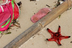Dead Red starfish on white sand on sunny tropical beach. View on dead starfish in the sea by Phu Quoc island in Vietnam. Pollution: Garbages, plastic, and wastes on the beach. Environmental pollution.