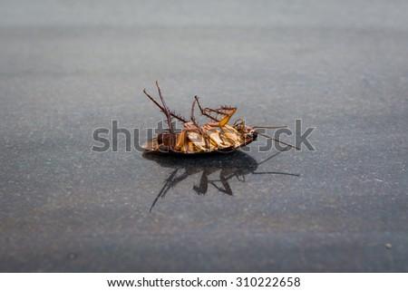 Dead roaches on the floor Granite tile