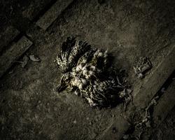 Dead rotten bird gull on the ground