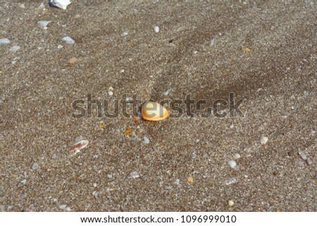 dead sea shells #1096999010