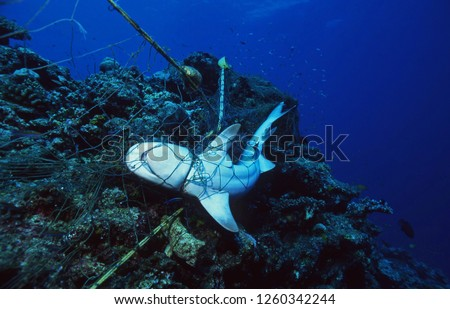 Dead Shark in fishing net strangled to death / Ocean Environmental Destruction / Marine Protection