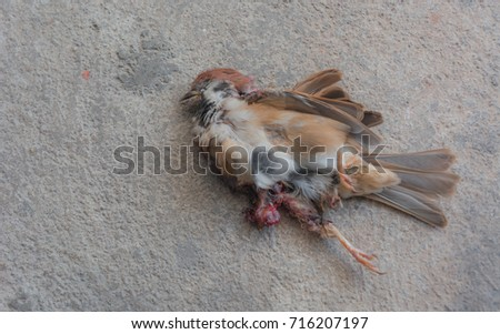 dead sparrow on the cement floor. #716207197