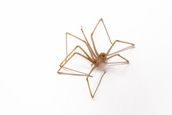 Dead spider. A dead insect. Macro photo. Brown home safe spider. Spider on a white background. The texture of the body and long legs of the spider. Hair, villi on the body of an insect.