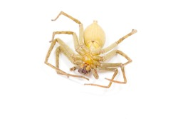 dead spider on white background